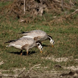 Day out in Bharatpur Bird Sanctuary