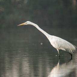 A morning in Sultanpur Bird Sanctuary